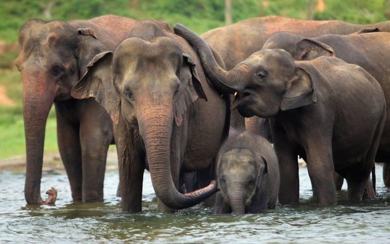Sri Lanka At A Glance - 5 Days / 4 Nights