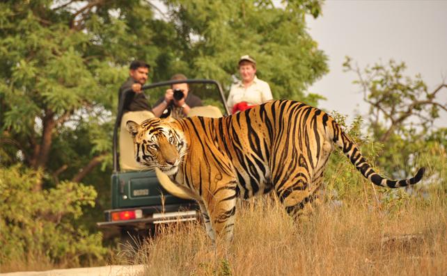 Dandeli Ventures Jungle Safari (DVJ)