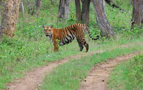 Bandipur And Ooty Tour Package