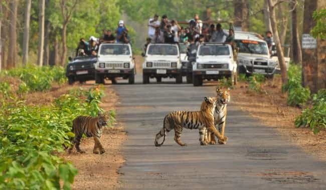 3N 4D Ranthambore- Jaipur Package