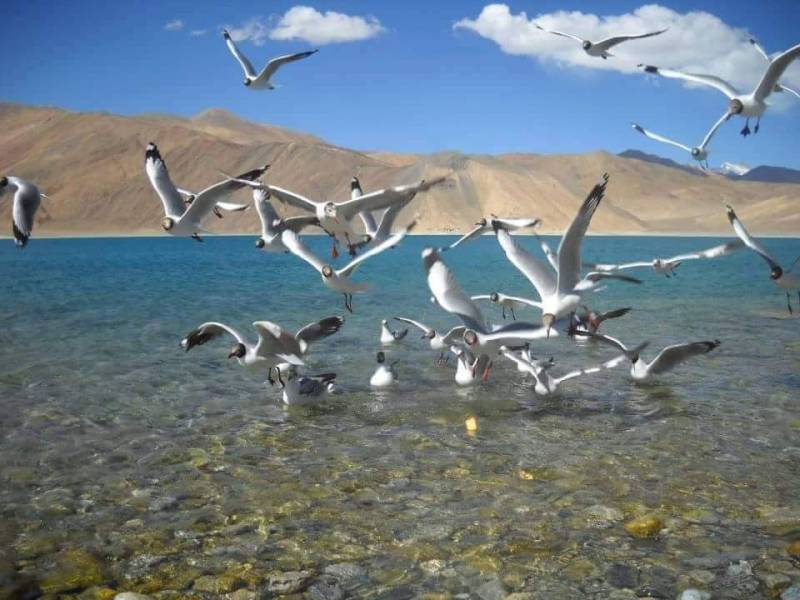 4 Nights & 5 Days Leh- Ladakh Tour