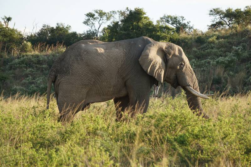 One Day Safari - Tarangire National Park  With Burigi Chato Safaris