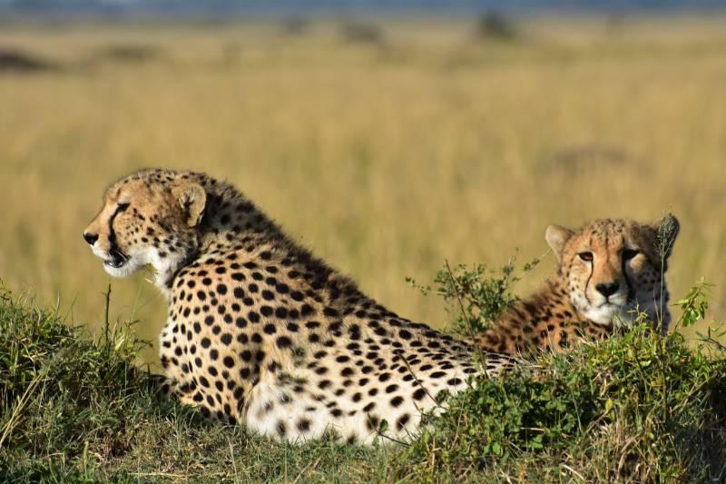 1 Day Safari In Ngorongoro Crater With Burigi Chato Safaris
