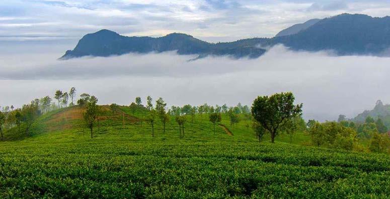 Mysore Ooty Scenic Nature Tour
