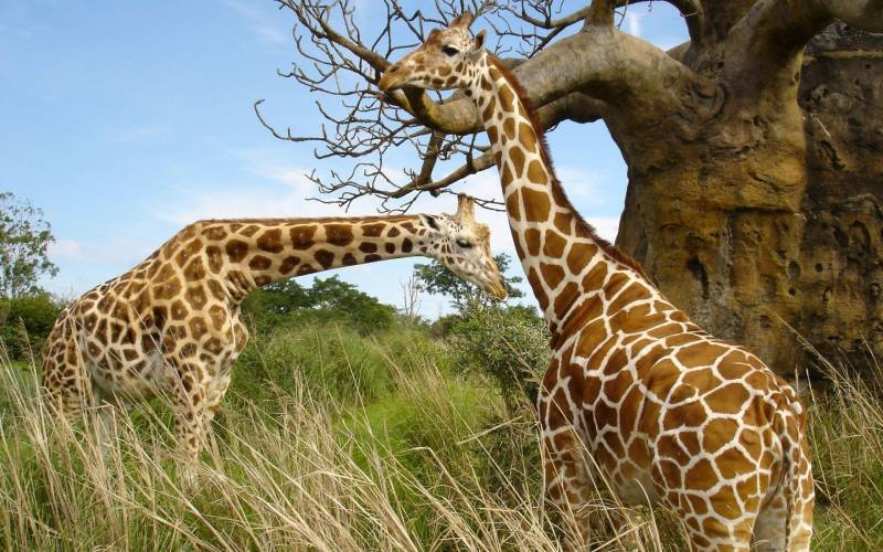 4 Days Tanzania Wildlife Adventure Safari