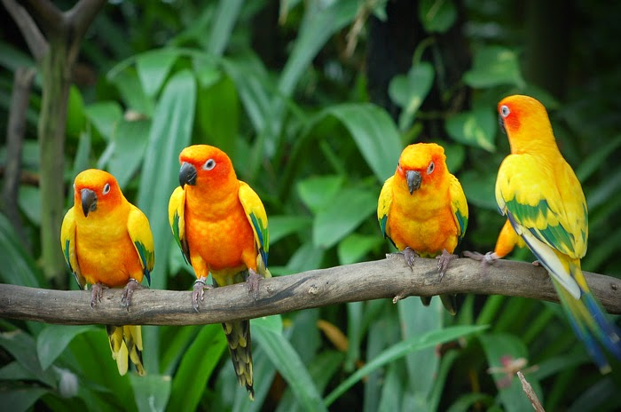 Karnala Bird Sanctuary Tour