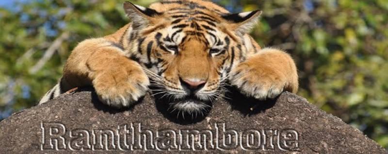 Ranthambore Wildlife Sanctuary Tour
