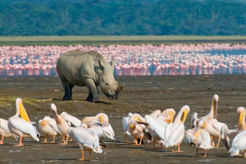 Full Day Lake Nakuru National Park And Birds Sanctuary Package