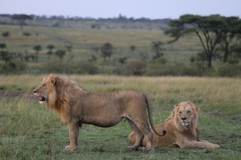 Plan Your Dream Vacation In Masai Mara Package