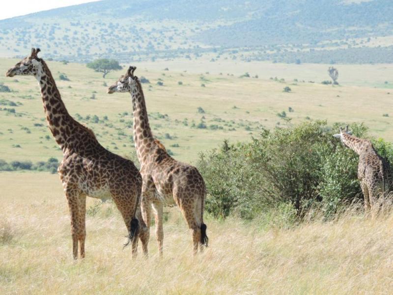 Kenya Adventure Holiday Dream Safari Package