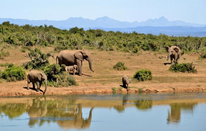Exclusive 7 Days African Safari Vacations Package