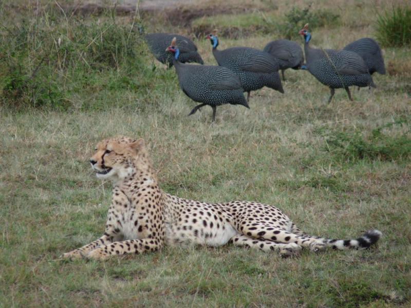 Kenya Adventure Safaris Package