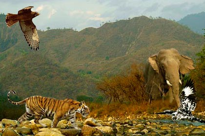Wildlife Adventure Tours In India
