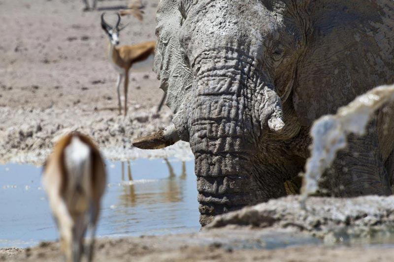 3 Day - Etosha National Park Tour
