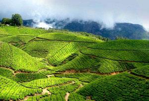 Munnar - Thekkady - Periyar - Alleppey - Cochin Honeymoon Holiday Tour