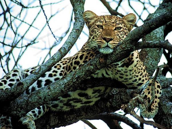 Aberdares - Samburu National Reserve Tour