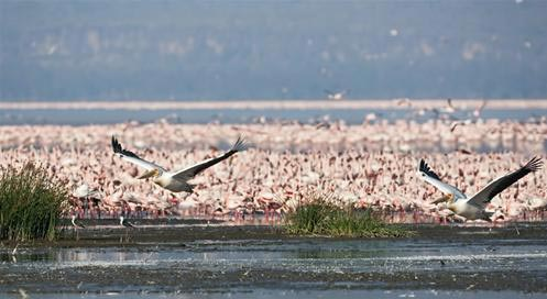 Maasai Mara - Lake Nakuru National Park Package