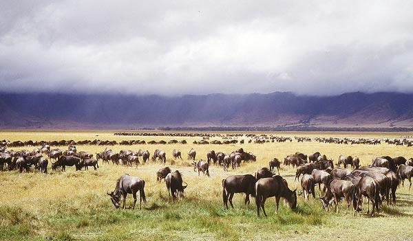 Ngorongoro - Lake Manyara Package