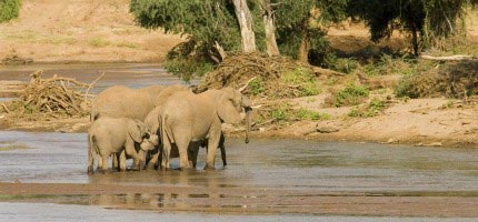 Maasai Mara - Nairobi - Nakuru - Samburu - Mt. Kenya Tour