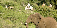 Kenya Educational Student Safari Tour