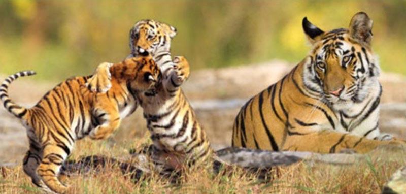 East India Wildlife Tour