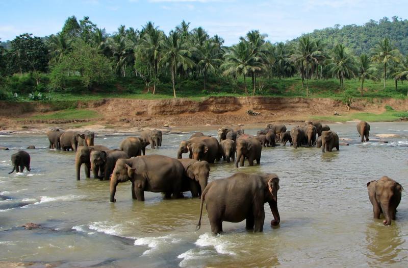 Bentota – Galle – Thissamaharama – Nuwara Eliya – Kandy – Pinnawala – Dambulla Tour