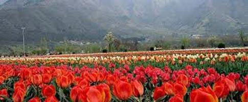 Jammu - Katra - Vaishnodevi Tour
