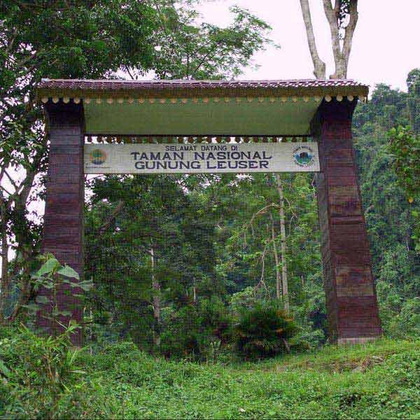 Sumatra Orangutan & Trekking Leuser 8 Days Package