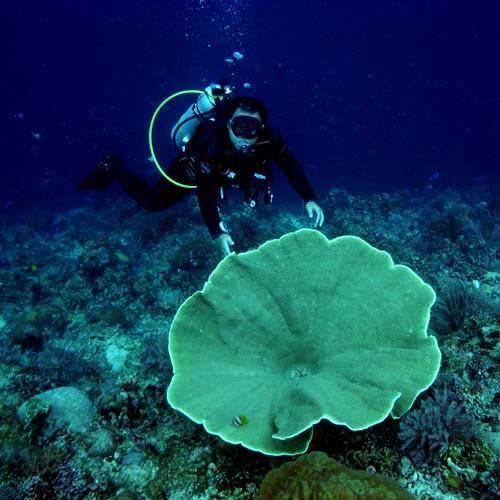 Manado Wildlife, Volcano, Snorkelling Package