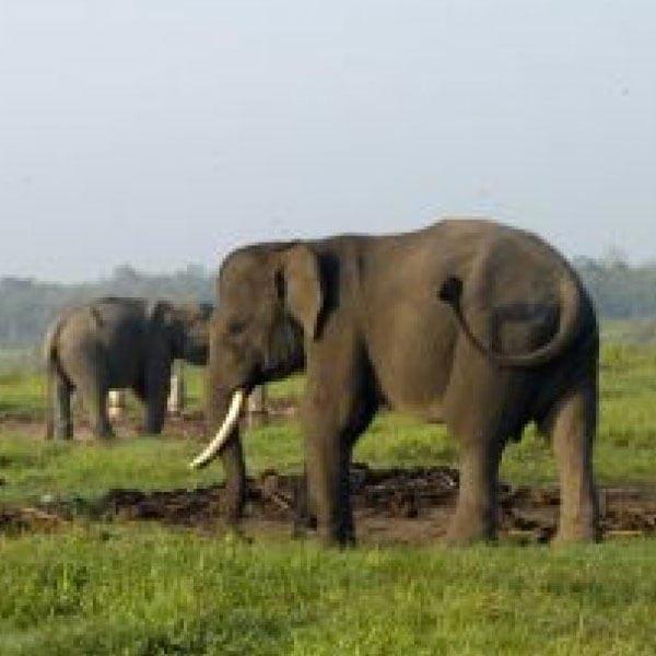 Way Kambas National Park Package