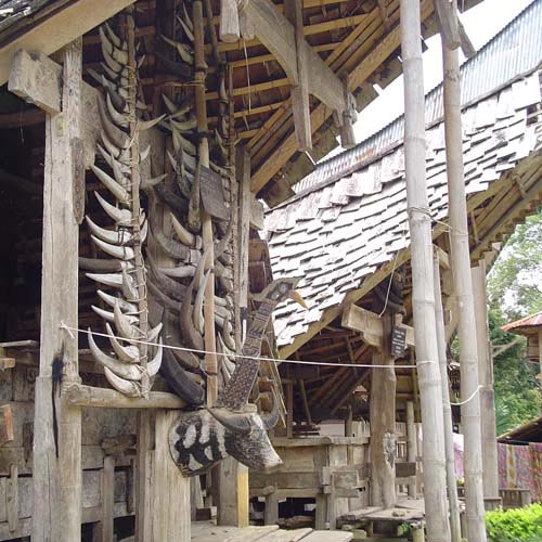 Discover Sulawesi 15 Days Package