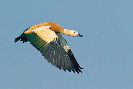Mangalajodi - The Birds Paradise(odisha) Tour Pacakge
