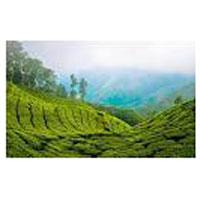 Kerala 5N 6D Honeymoon Package