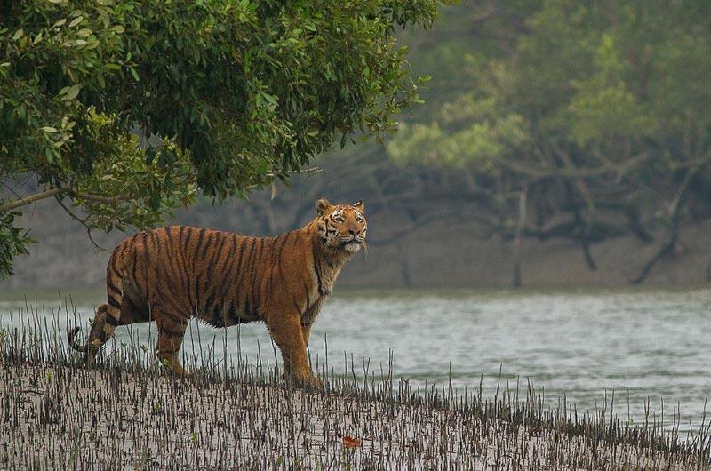 Royal Heritage Of Bengal Tour