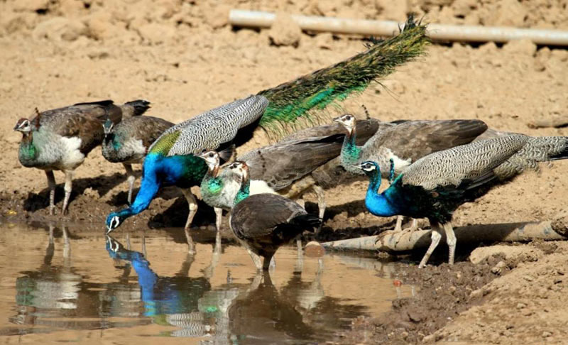 Wildlife Tour Rajasthan