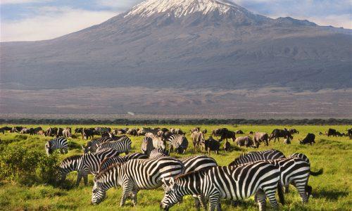 Aberadare National Park - Lake Nakuru - Masai Mara - Nairobi Tour