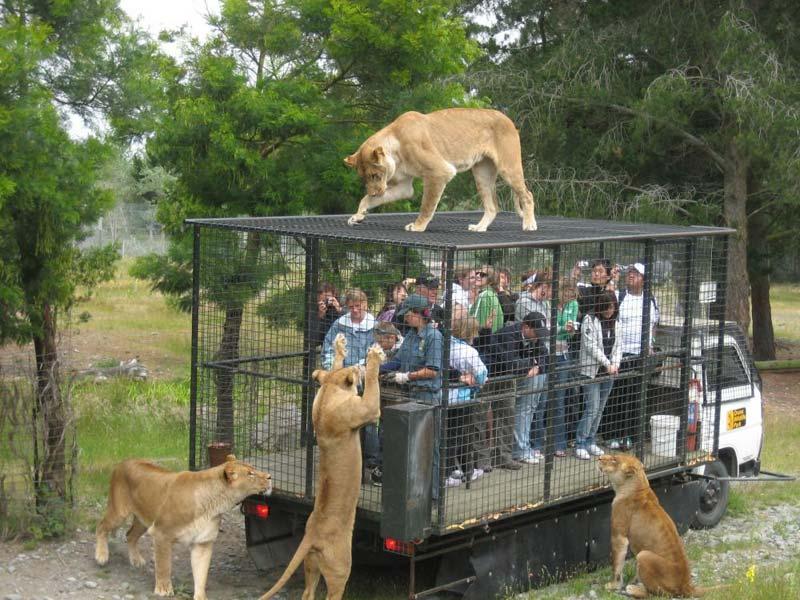 Wildlife Explore In Tamil Nadu Package