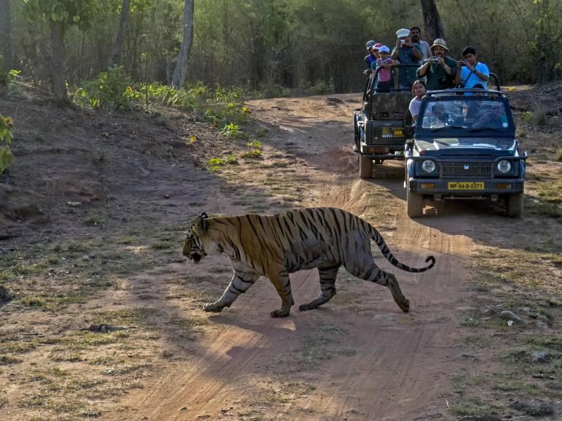 Bandhavgad Jungle Safari Tour