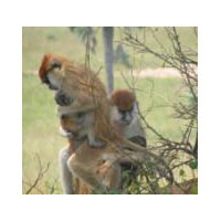 3 Days Wild Life Viewing Tour-Uganda Tour
