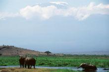 Mt Kilimanjaro Safari Tour