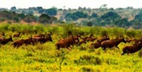 3Days/2 Nights Akagera National Park Tour & Local Community Visit Tour