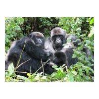 5Days/4 Nights Wildlife - African Primates Tour