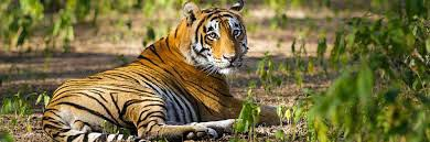 Jaipur With Wildlife Ranthambore Tour