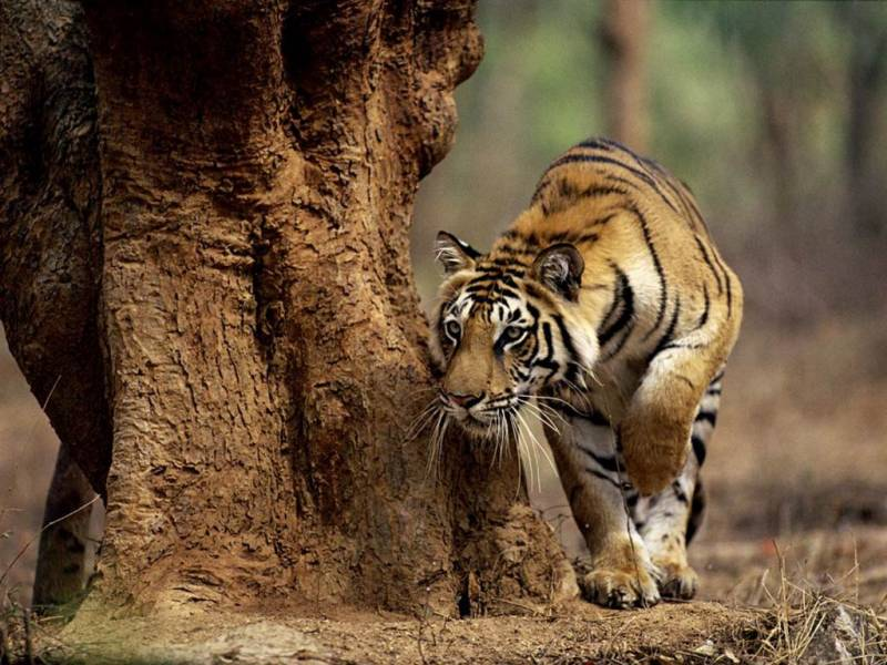 Central India Wildlife Tour