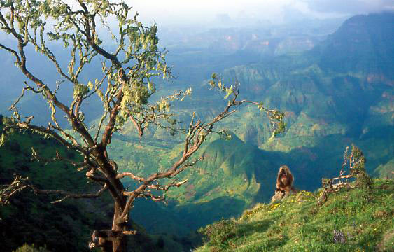 Trekking In The Simien Mountains National Park