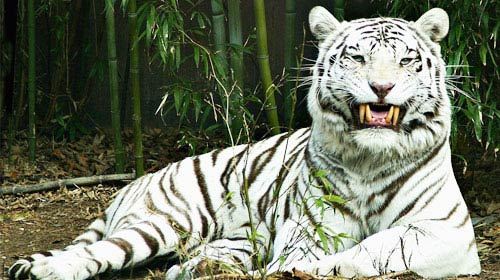Wildlife Tour To Odisha
