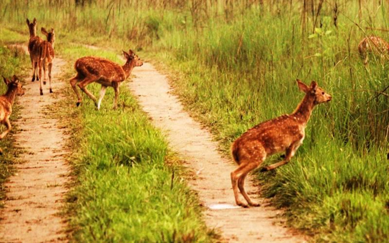 India Cultural Wildlife Tour