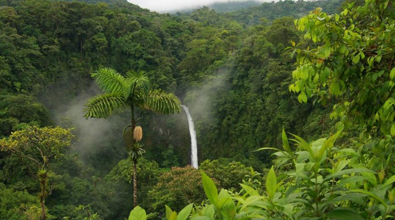 Mysore Coorg Wayanad Ooty Tour Package
