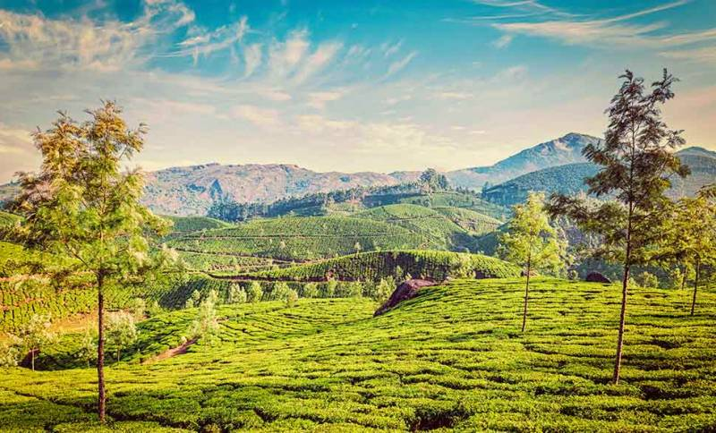 Dream Kerala Tour Package
