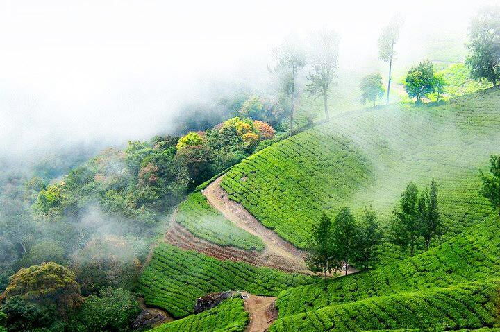 Kerala Hillstation Package